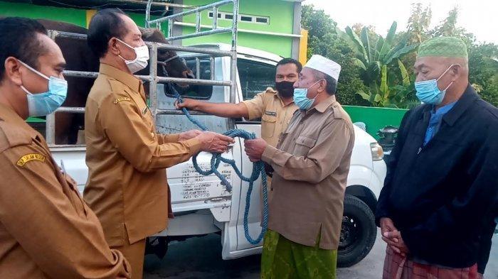 Pemerintah Daerah Timor Tengah Utara Serahkan Bantuan Hewan Kurban kepada Umat Muslim