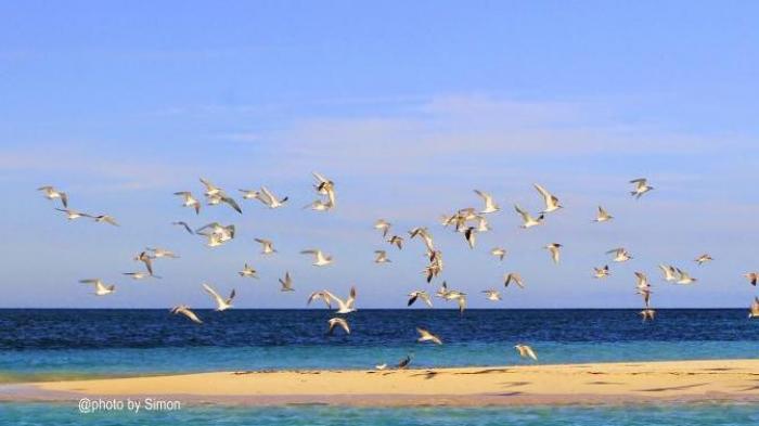 Burung-burung di Pulau Meko, pulau pasir timbul.