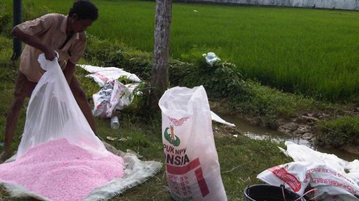 Tak Diakomodir Jatah Pupuk Di RDKK, Sejumlah Petani 'Mengamuk'