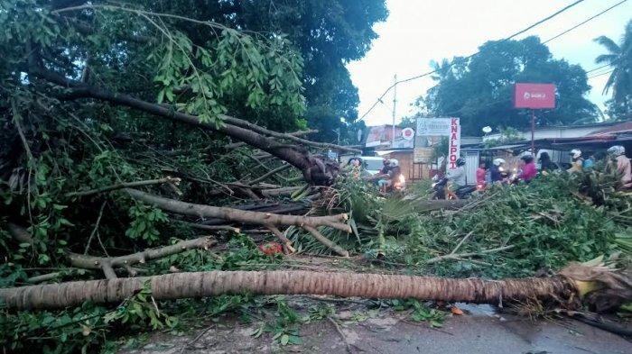 Pohon Tutupi Ruas Jalan di Wilayah Oebufu Kota Kupang, Kendaraan Harus Antri