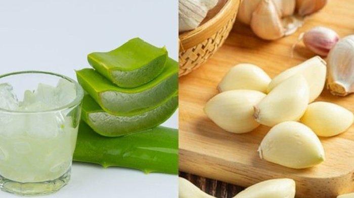 Rutin Minum Jus Lidah Buaya dan Bawang Putih Ampuh Cegah Berbagai Penyakit, Kolesterol hingga Kanker