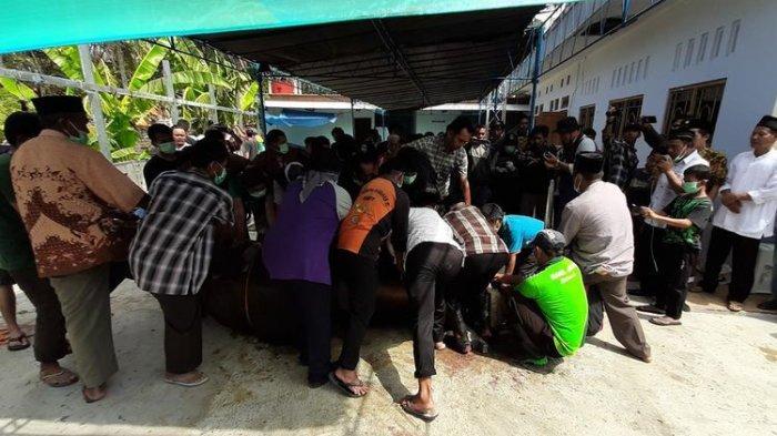 Sapi Kurban Milik Jokowi Berulah, Sepak Kaki Warga hingga Sempat Mogok Makan