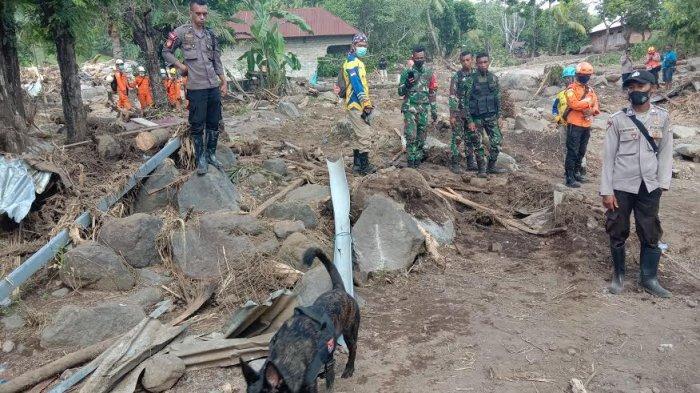 Seekor anjing pelacak yang didatangkan dari Mabes Polri tampak sedang mencari lokasi keberadaan mayat yang tertimbun di desa Amakaka, Kecamatan Ile Ape, Kabupaten Lembata, Kamis 8 April 2021