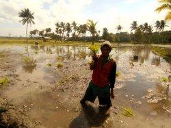 Ini Keluhan Petani Padi Sawah di Mauliru Sumba Timur