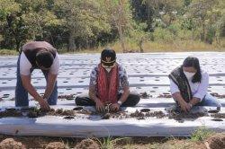 Wakil Bupati Belu, Drs. Aloysius Haleserens, MM bersama Wakil Ketua TP PKK, Rinawati BR Perangin Angin menanam di Dusun Dubasa B, Desa Dafala, Kecamatan Tasifeto Timur, Sabtu 22 Mei 2021.