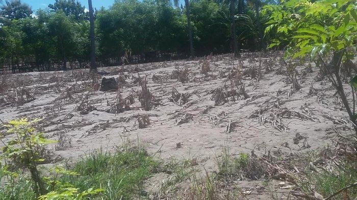 Bupati Malaka Perintahkan Dinas PUPR dan Pertanian Turun Lapangan