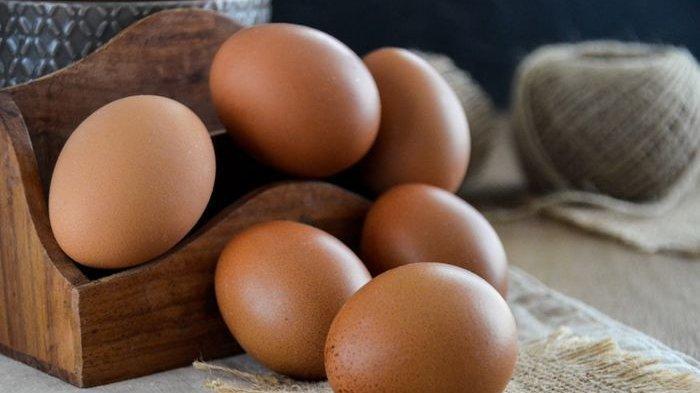 Anda Doyan Makan Telur ? Wajib Tahu Berapa Lama Telur Segar Bisa Disimpan, Begini  Jawabannya