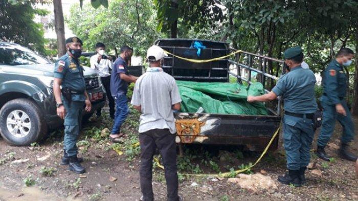 Tersangka Penjualan Daging Rusa di Labuan Bajo Diancam 6 Tahun Penjara dan Denda Rp 100 Juta