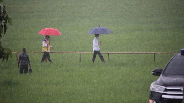 Tinjau Food Estate di Kabupaten Sumba Tengah, ini pesan Presiden RI Jokowi