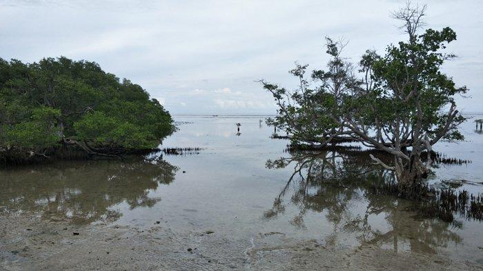 TRIBUN WIKI: Pantai Kapal Pecah Kanatang, Sumba Timur Suguhkan Keindahan Bakau dan Birunya Laut