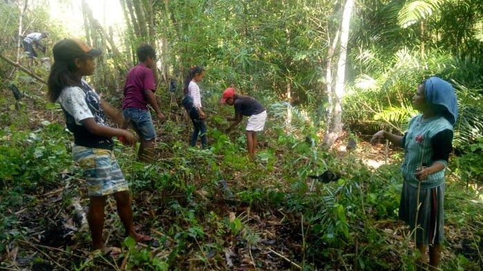 Umat KUB St. Fransiskus Kurubhoko Ajak Masyarakat Tanam Anakan Pohon