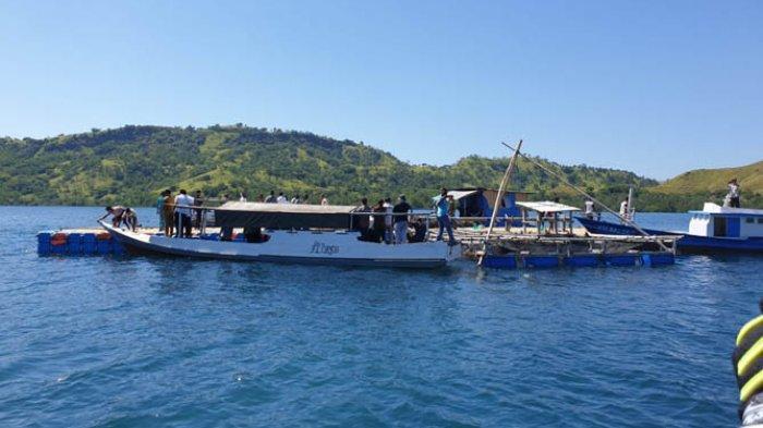 Wagub NTT, Josef A. Nae Soi Tinjau Tambak Ikan Kerapu di Riung