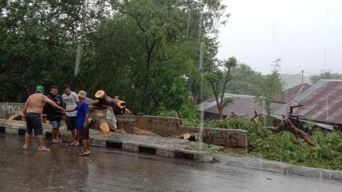 Pohon Tumbang Di Jalan Nangka Kota Kupang, Lurah Oeba : Tidak Ada Korban Jiwa