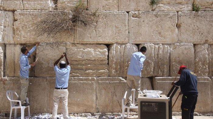 Gempar! Ular Muncul di Tembok Barat Israel, Kiamat dan Isa Almasih akan Datang? Ini Penjelasannya