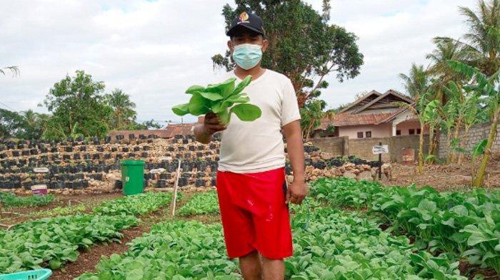 Taklukkan Lahan Kering, Yohanes Malaipada Sukses Kelola Bisnis Hortikultura