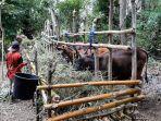 anggota-kelompok-penggemukan-sapi-desa-oenoni-2-membawa-pakan.jpg