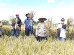 bhabinkamtibmas-bersama-warga-panen-hasil-pertanian-pemberdayaan-masyarakat.jpg