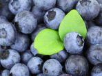 buah-blueberry_20170308_155651.jpg