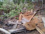 diduga-tebang-kayu-di-kawasan-hutan-lindung-kepala-desa-oenaem-di-ttu-ditangkap-polisi.jpg