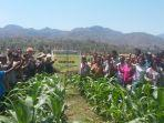 foto-bersama-petani-poktan-amnekat-desa-oeteta.jpg