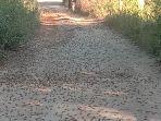 hama-belalang-yang-ada-di-ruas-jalan-menuju-d.jpg