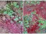 heboh-cairan-merah-mirip-darah-keluar-dari-dalam-tanah.jpg