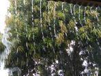 hujan-di-maumere.jpg
