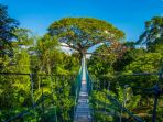 hutan-amazon_20180630_103659.jpg