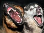 ilustrasi-rabies.jpg