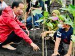 jokowi-menanam-mangrove-di-riau_01.jpg