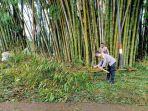 kapolres-ngada-turun-ke-lokasi-untuk-membersihkan-pohon-bambu.jpg