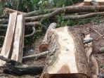 kayu-sonokeling_20170803_083410.jpg