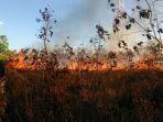 kebakaran-hutan-di-ttu_20170824_092812.jpg