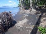 kelapa-di-pantai-leworahang-desa-ilepadung-kecamatan-lewolema.jpg
