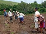 kelompok-tani-mona-noa-di-desa-anakoli-kembangkan-pangan-lokal-dan-holtikultura.jpg