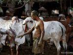 kotoran-sapi-jadi-ibat-covid-10-di-india.jpg