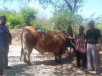 luar-biasa-berat-sapi-yang-dibeli-jokowi-naik-dari-981-kilogram-menjadi-1002-ton.jpg