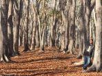 musim-gugur-di-kabupaten-tts.jpg