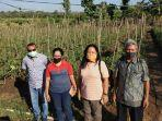 pendampingan-politeknik-pertanian-negeri-kupang-11-ton-tomat-siap-banjiri-pasar-kupang.jpg