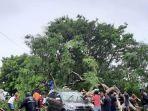 pohon-tumbang-mengenai-kendaraan-di-kota-kupang.jpg
