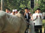 presiden-joko-widodo-saat-menyerahkan-seekor-sapi_20180822_152436.jpg