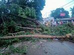 ruas-jalan-di-oebufu-kota-kupang-tertutup-pohon-tumbang.jpg