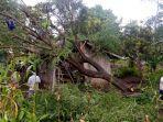 rumah-anastasia-roboh-diterpa-pohon-tumbang-penghuni-mengungsi-ke-rumah-tetangga.jpg