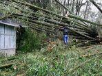 rumah-rusak-berat-akibat-tertimpa-bambu-di-bajaw.jpg