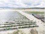 rumput-laut-yang-sedang-dibudidayakan-oleh-petani-di-sumba-timur_20181029_144530.jpg