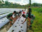 sejumlah-personel-tni-saat-membantu-petani-di-perbatasan-menanam-tomat.jpg