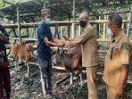 sekda-boni-serahkan-bantuan-ternak-sapi-kepada-empat-kelompok-peternak-di-borong.jpg