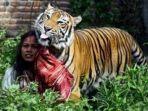 shole-dan-harimau.jpg