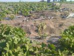 tanaman-melon-petani-urut-sewu-rusak-dilindas-kendaraan-tni.jpg