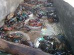 tangkapan-kepiting-bakau-di-terang-manggarai-barat-tinggi-harga-menggiurkan-lihat-nominalnya.jpg